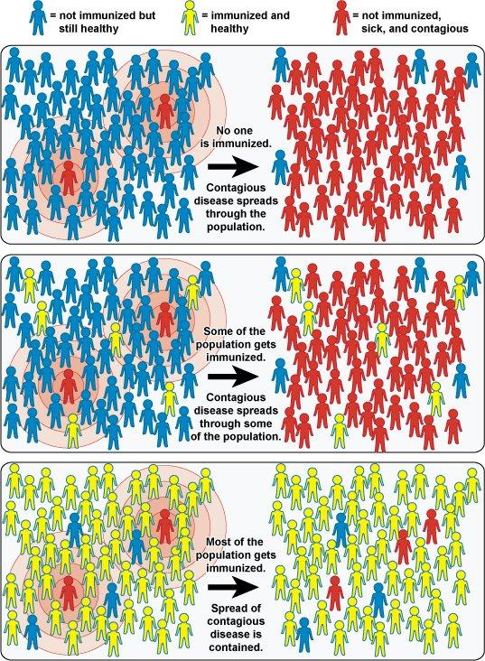 Колективний імунітет